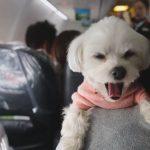 いつも一緒!愛犬と旅行ができるJALのツアーがあった