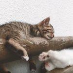 ドライバー必見!日産の猫バンバンプロジェクトムービー