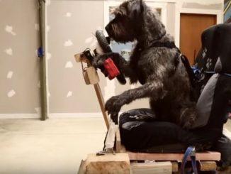 真剣に運転の練習をする犬