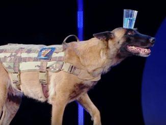 中国の番組で、頭に水の入ったコップを乗せて歩く犬が登場