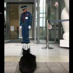 呼び寄せた?尾道市の「猫まみれ展」に本物の猫が来訪
