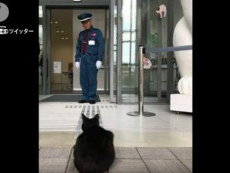 館内に入りたそうな猫