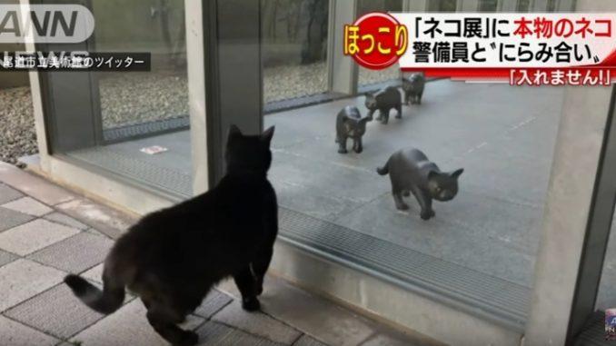 窓の外から中を覗く猫