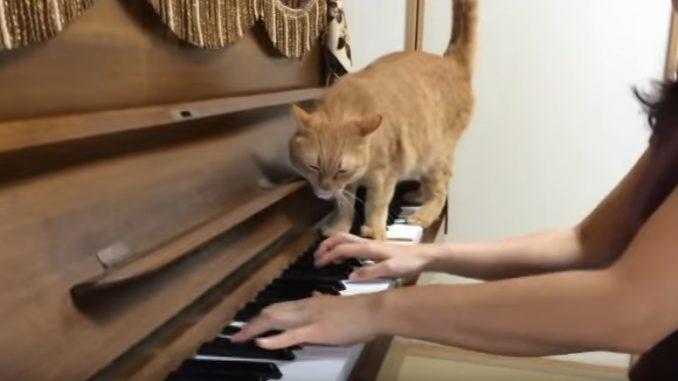 譜面台に頭をこすり付け、構って欲しいアピールをするネコちゃん