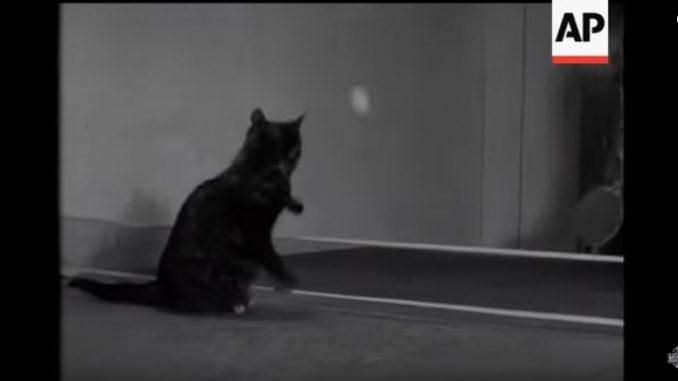 かなり長い間ラリーを続ける猫