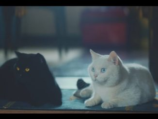 猫がおばあさんの知らないところで勉強を始めるユーニャンねこ勉CM動画