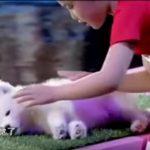 トリックか本物か?動物を眠らせてしまう中国の少女