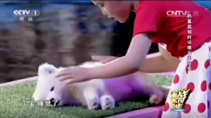 かわいい歌を歌いながら子犬を眠らせた少女
