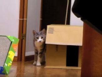 ゆっくりとカメラに近付いてくるネコ