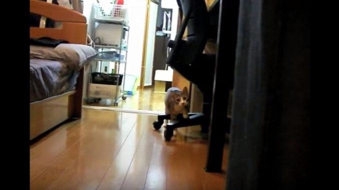 だるまさんが転んだをしているかのように、じわじわ近付いてくるネコ