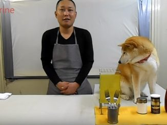 柴犬マリとクッキング