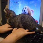 とにかくかまって!キーボードの上に乗って邪魔するネコがかわいい