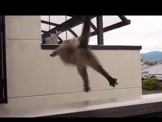 隣の家のベランダに飛び移ろうとするネコ