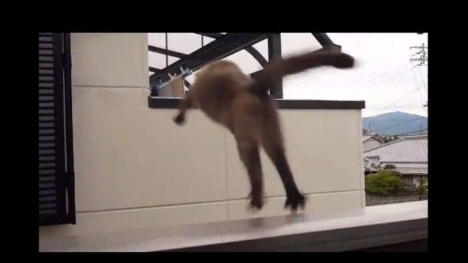 隣の家に飛び移ろうとして見事に失敗したネコ