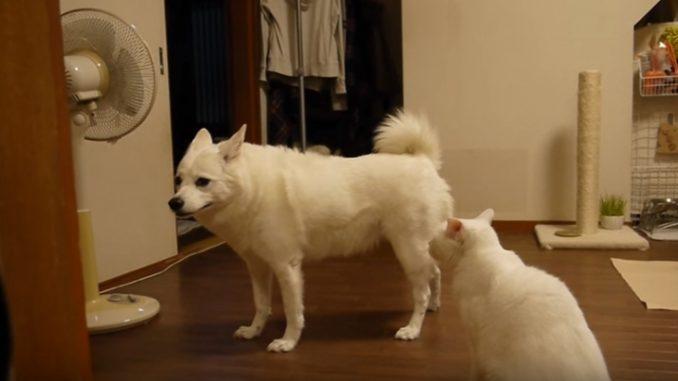 猫に文句を言われ、困ったように別の方向を向く犬