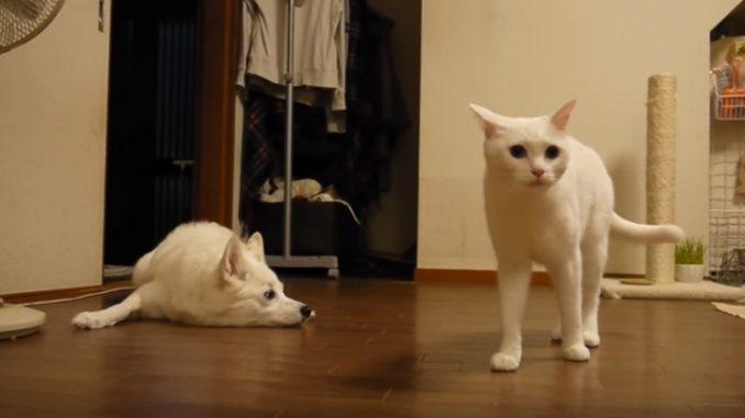 降参した犬と勝った猫