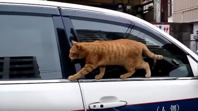 後部座席に移動していく猫