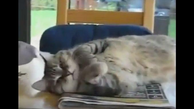 決して爪を立てたりしないネコ