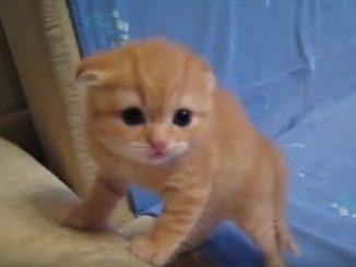一人になった子猫