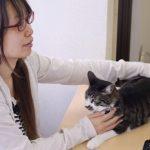 ネコ好き必見!ネコ同伴出勤できる会社があった