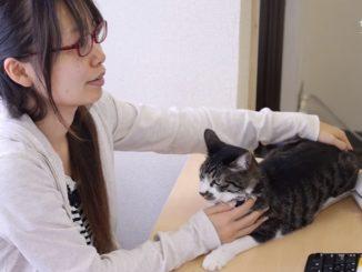 ネコ同伴出勤制度がある都内のIT企業ファーレイ
