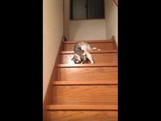 体をくねらせて階段を滑り降りてくるネコ