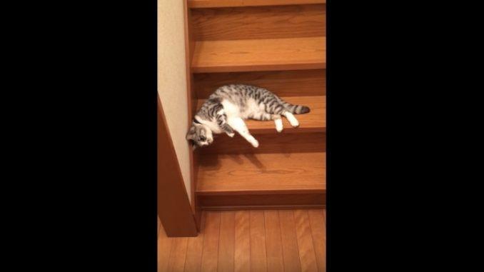 最後の段までやり切らないネコ