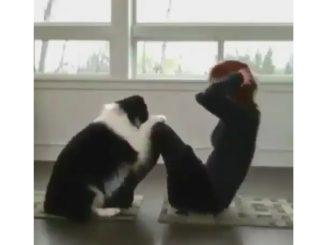 ご主人と一緒にエクササイズする犬