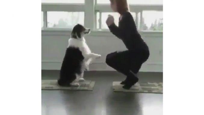 犬好きにとってはうらやましい状況