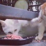 これは私の!エサを独占するためにネコが取った驚きの行動とは