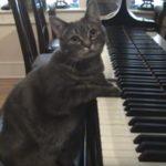 素晴らしい演奏!ピアノを弾くネコと人間がセッション