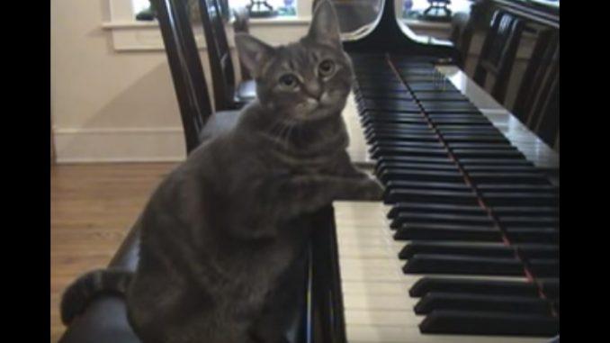 気分が乗った時だけ演奏するネコ
