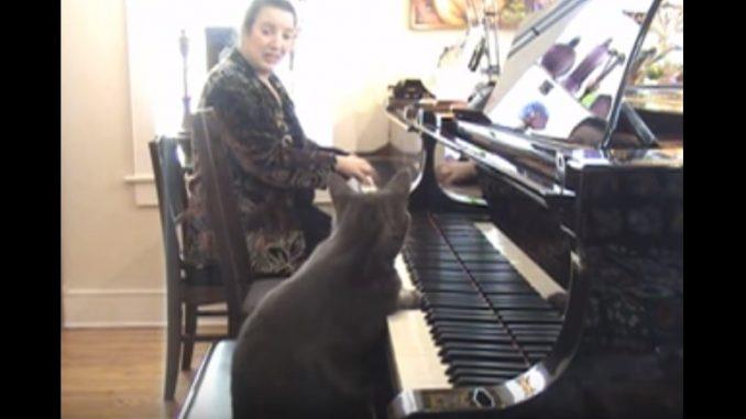 素晴らしい演奏を披露するネコ