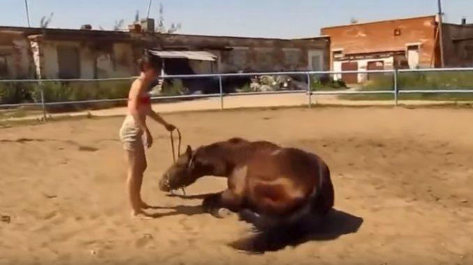 優しい馬は膝を折って女性を乗せようとする