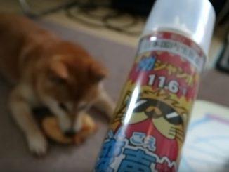ご主人がヘリウムガスを吸ったら愛犬は言うことを聞くのか実験