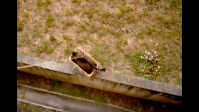 上から降ろしたカゴに入る猫