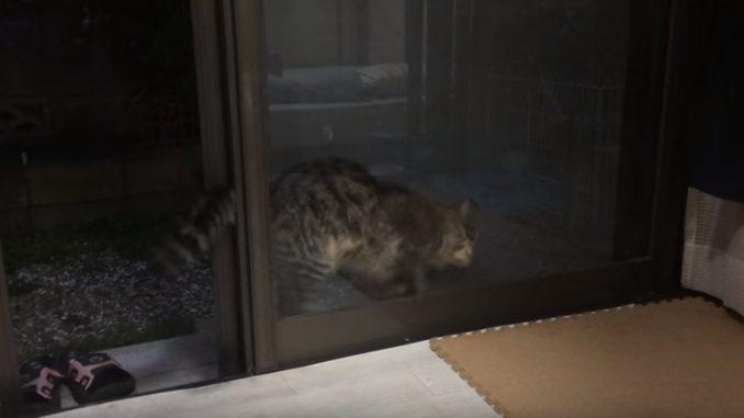 窓と窓の間にハマってしまうネコ