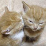 私が支える!必死に睡魔と戦う子ネコがかわいい