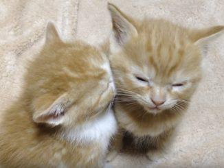 子ネコを支える子ネコ
