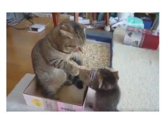 子ネコのパンチに一瞬本気になる猫