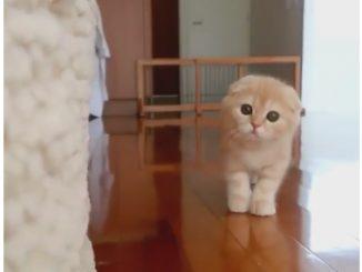 海外のだるまさんが転んだをする猫